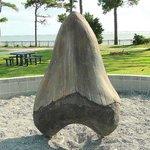 shark tooth sculpture outside