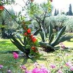il giardino pieno di fiori