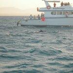 delfini.....