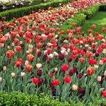 Jardim de tulipas próximo à entrada do museu.