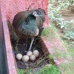 Un pavo real en el balcon