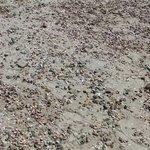 shells cover the white sandy beach