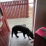 El perro en nuestra habitación