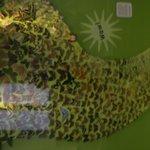 Butterflies, beautifully arranged....