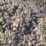 Millions of shells to choose from