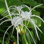 Beautiful Tropical Florals