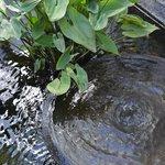 Fountain in courtyard of Water Garden Rooms (#17)