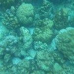 Phi Phi Island tour- great snorkeling