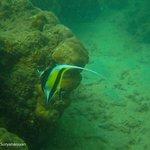 Angle Fish (??)