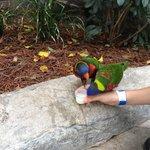 Feeding the parrots!