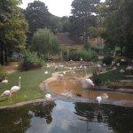 beautiful flamingo enclosure