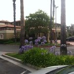 pretty in purple at holiday inn expeess