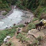 Langtang donkey convoy
