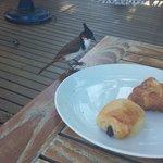 Les oiseaux au petit déjeuner essayent de vous le piquer en tout bien tout honneur.