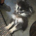 Owner's little dog