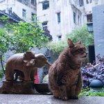 お気に入りの象の手水鉢