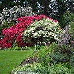 Rhododendrons in the Botanic Gardens of Edinburgh (photo Alie Valkema)