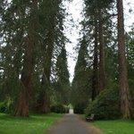 Giant trees in Benmore Gardens (photo Alie Valkema)