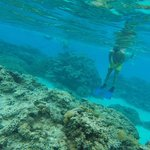 Snorkeling Coral Gardens