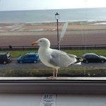 Seagulls are dangerous!!