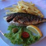 Sea bass !!