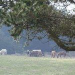 Foto de Chanslor Guest Ranch