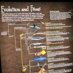 Information on evolution and where fish fit into it