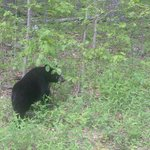 Bear right outside of entrance to Mathews Arm Campground
