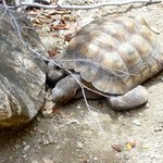 tortoise at the nature center