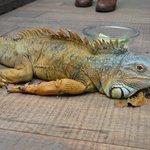 En el interior del parque una iguana