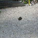 Turtle visitor in the garden