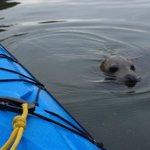 Seal Encounter