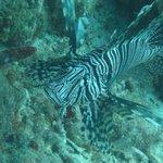 Lionfish at Creole Rock