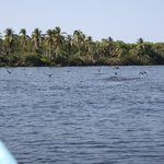 On the Manialtepec Lagoon