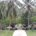 Garden around the hotel