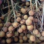 Longan - tasted like a Honeydew melon