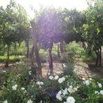 A walk through the wineyard