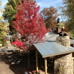 The Hubba Hubba compound is vibrant in fall.