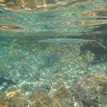 Houndfish and Pinheads