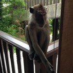 Monkeys on our deck