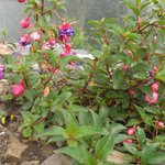 flores en lasalturas