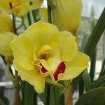 flor del Invernadero