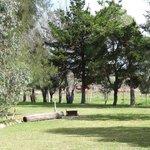 open grassy area in park