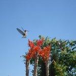 Bird in Courtyard in Summer
