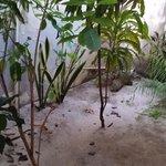 giardino in stanza