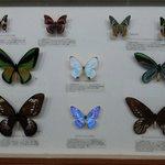 Beautiful Display of Butterflies.