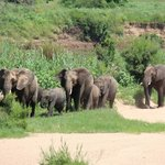 Elephants walking by as we ate lunch