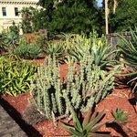 The succulent garden