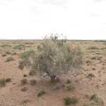 Fabulous desert landscapes all around.