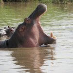 A Hungry Hippo!!
